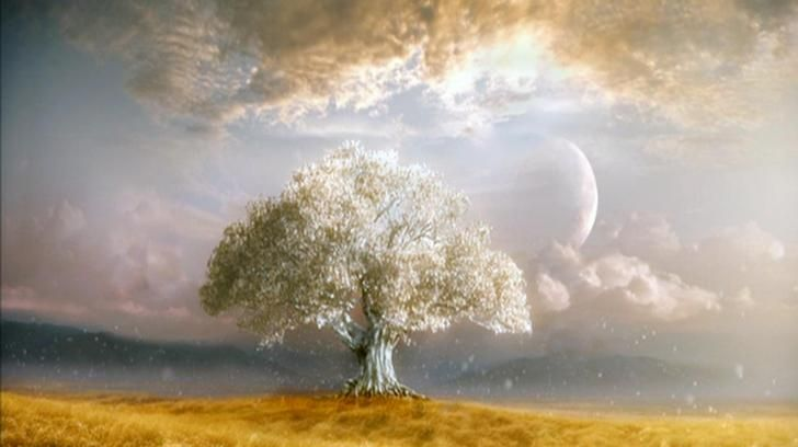 Tree of life - (#62305) - High Quality and Resolution Wallpapers on hqWallbase.com