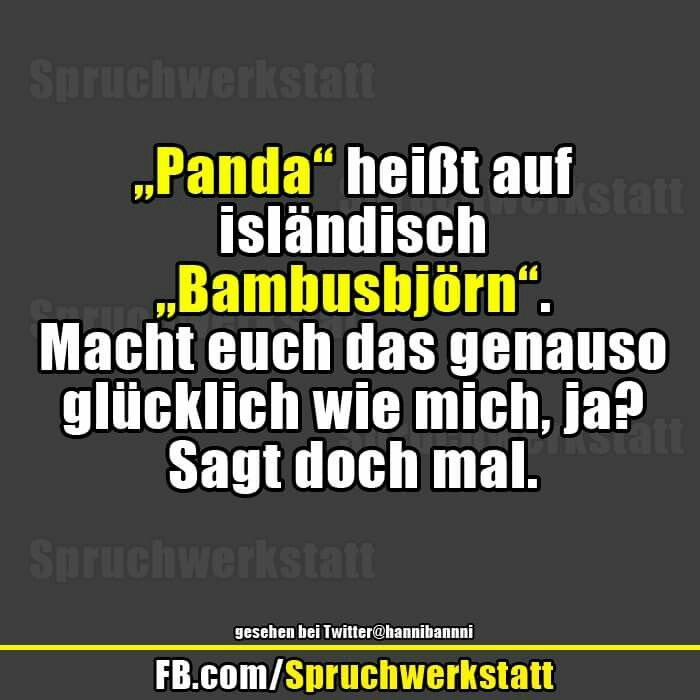 Bambusbjorn Lustiges Pinterest Humor Bad Mood And True Facts