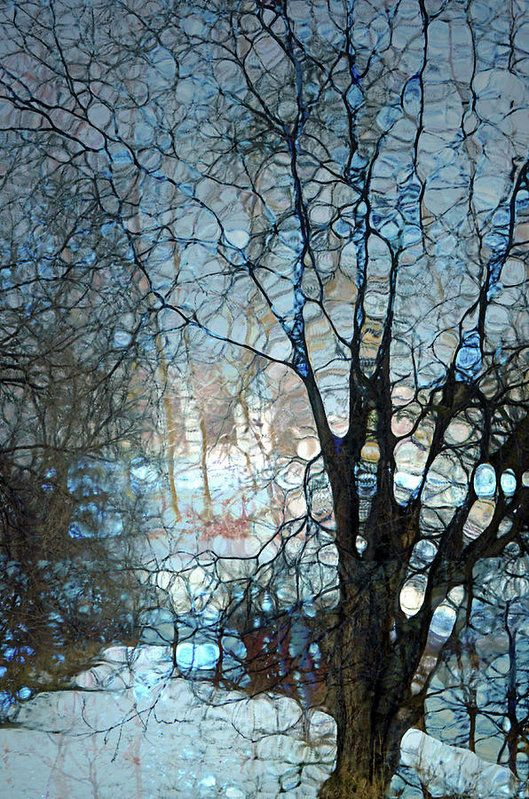 The Subdued Tree Art Print by Tara Turner
