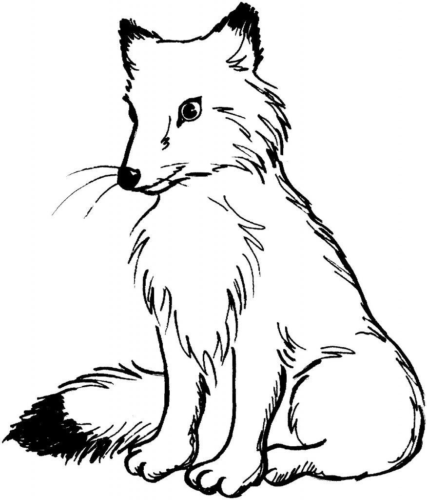 coloring.rocks!  Fox coloring page, Animal coloring pages, Horse