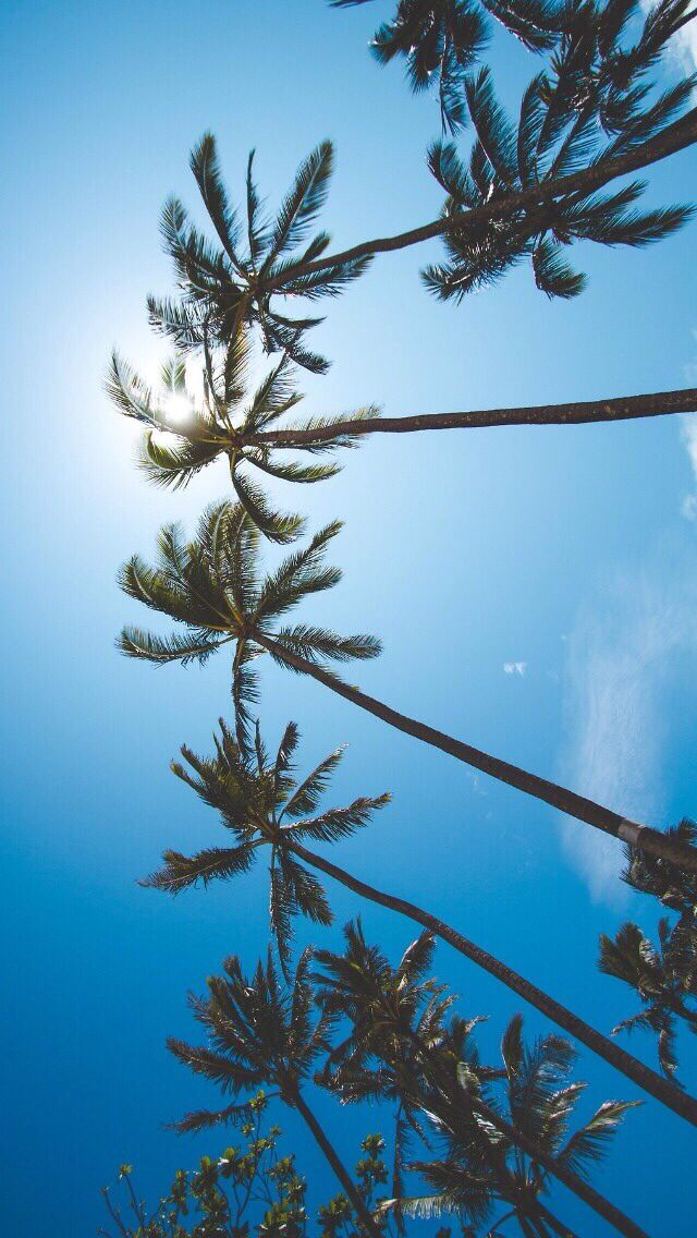 Palm trees iphone wallpaper | Iphone wallpaper | Sommar, Resor och Bakgrunder
