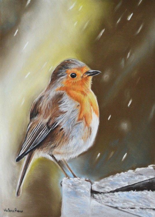 Dessin d 39 un oiseau rouge gorge sous la neige r alis au pastel sec sur pastel mat drawing of a - Dessin au pastel sec ...