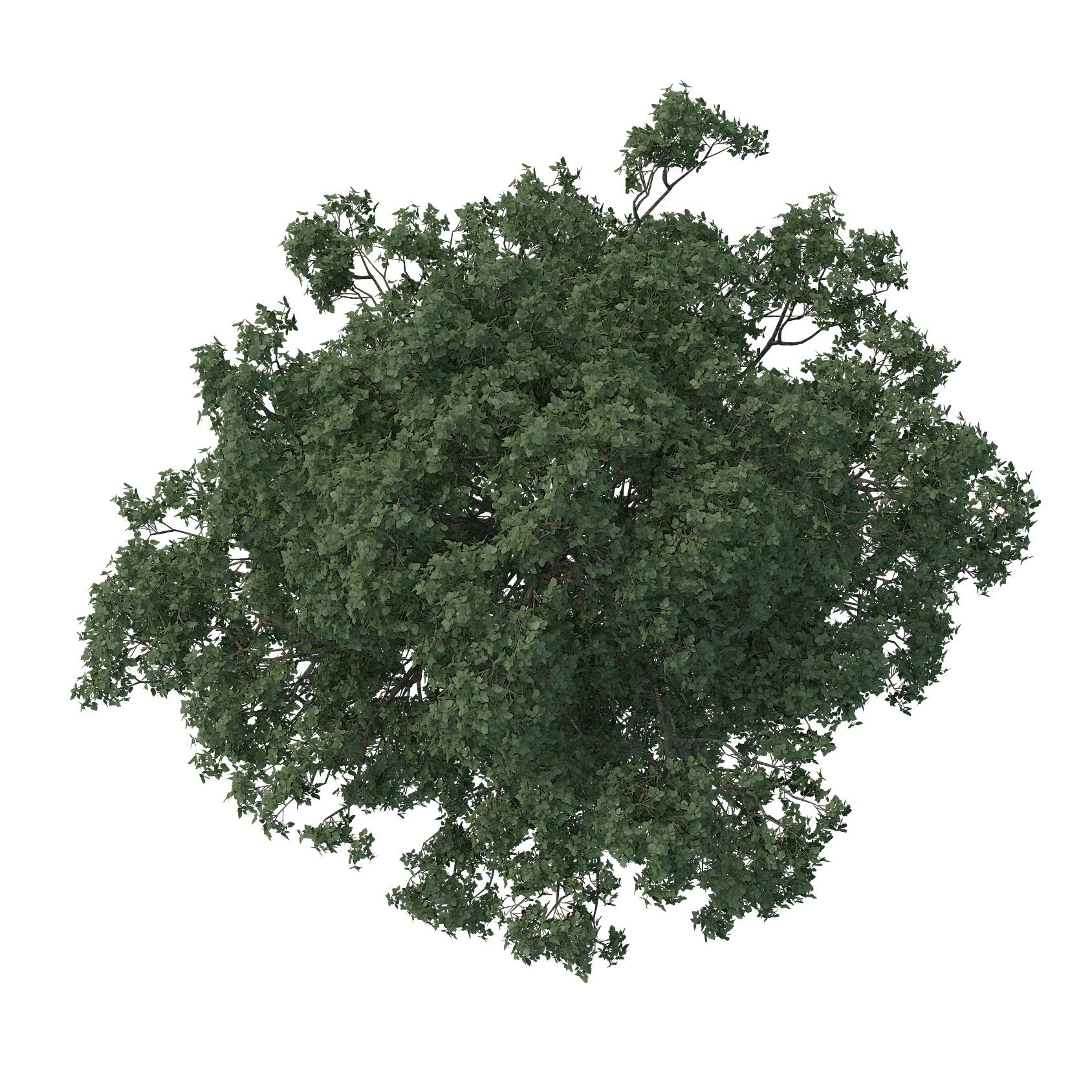 Making Of The White 3d Architectural Visualization Rendering Blog Tree Photoshop Trees Top View Tree Plan