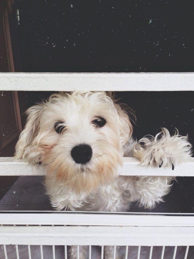 Pringles, my dog