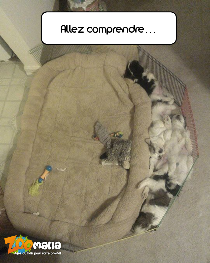 Chiot Coussin Zoomalia