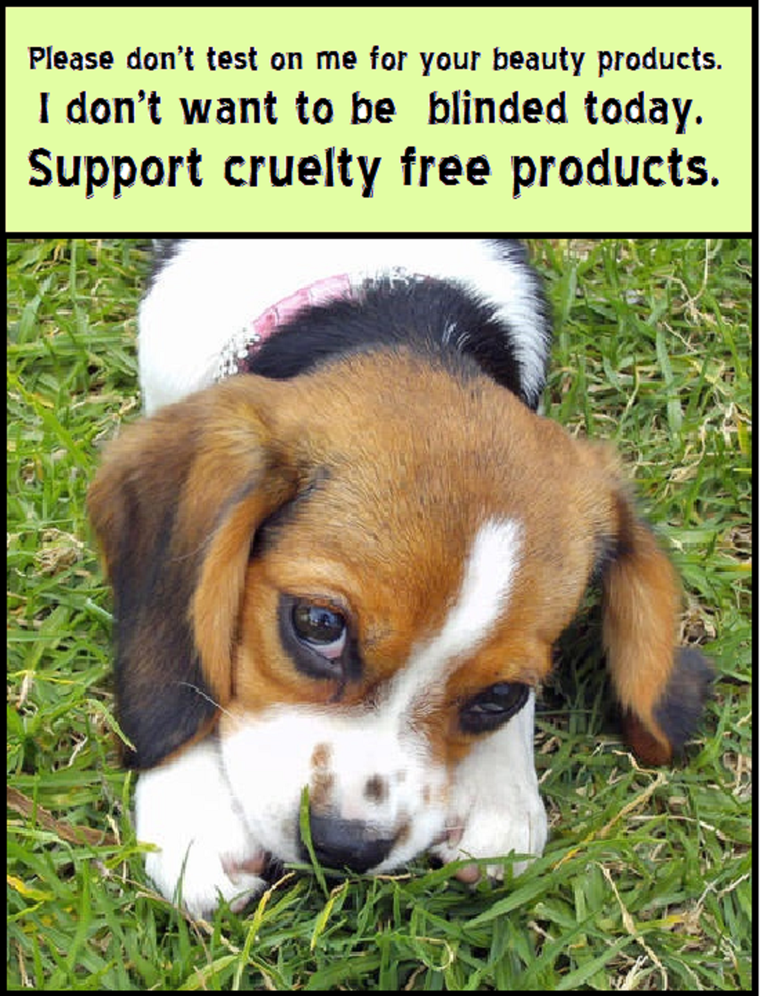 Stop testing on Beagles!! Shop cruelty free. So many