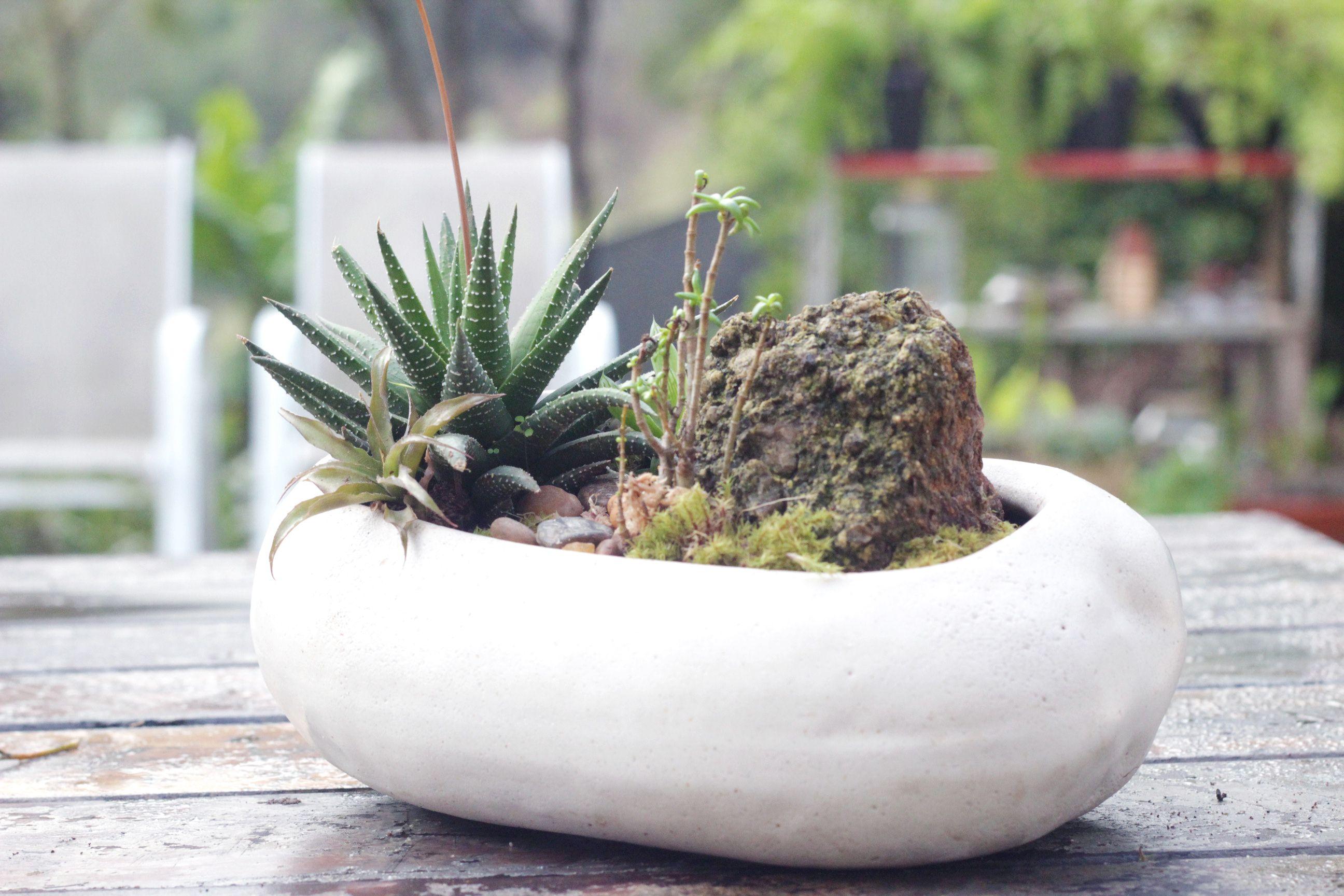 Mini Jardim de suculentas em vaso de cerâmica vietnamita.