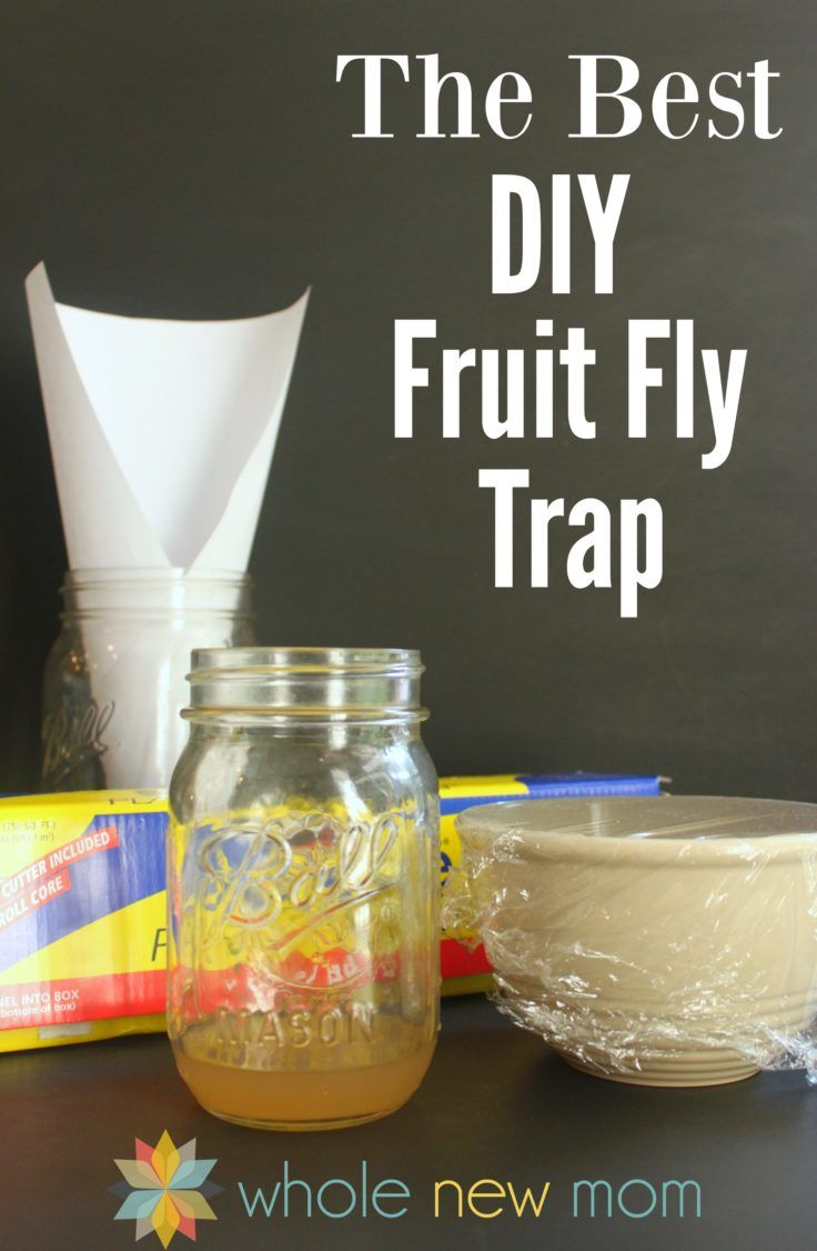 The Best Homemade Fruit Fly Trap Super Easy To Make Fruit Fly Trap Fruit Fly Trap Diy Diy Fruit Fly Trap