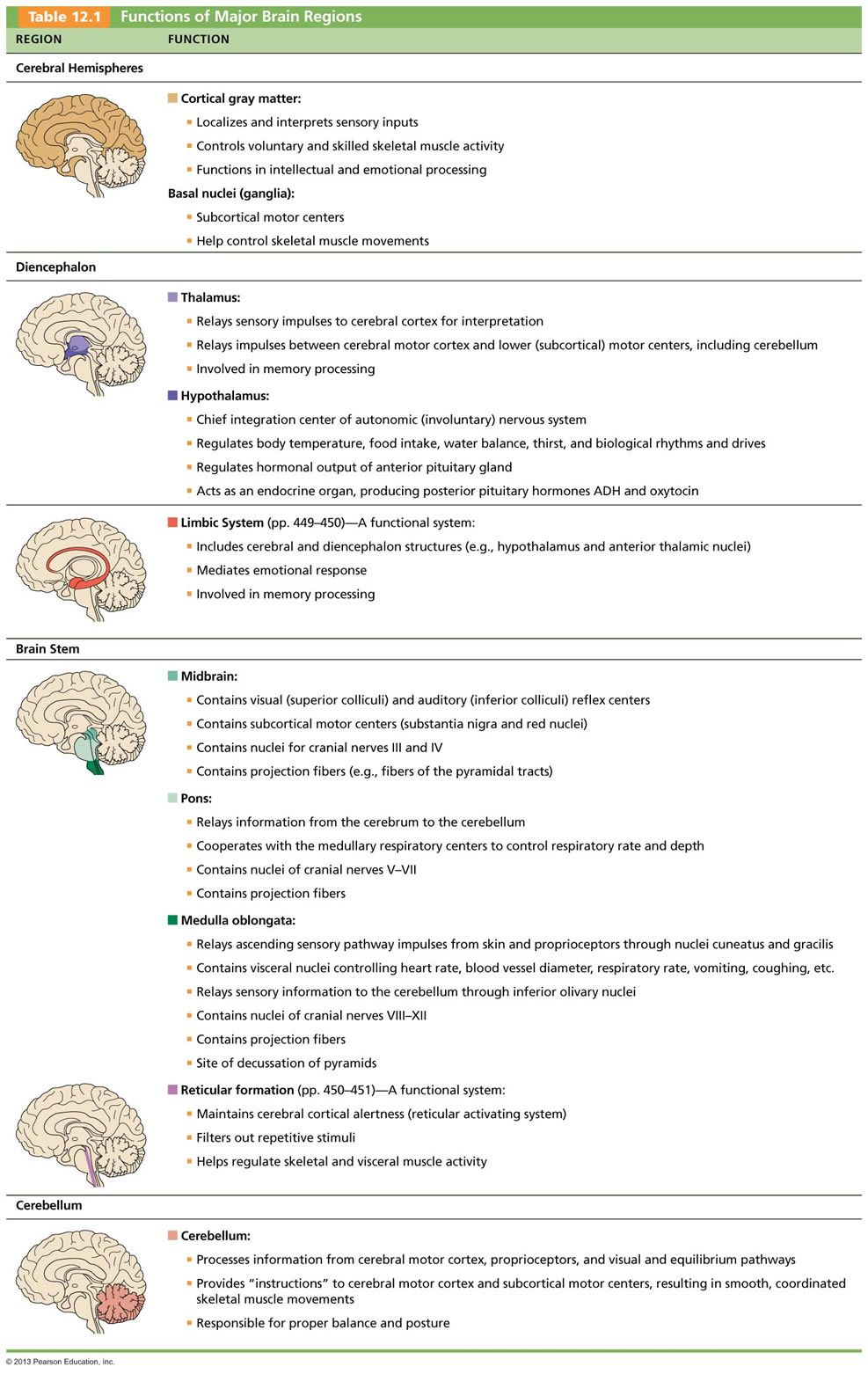 The central nervous system brain pinterest central nervous the central nervous system robcynllc Choice Image