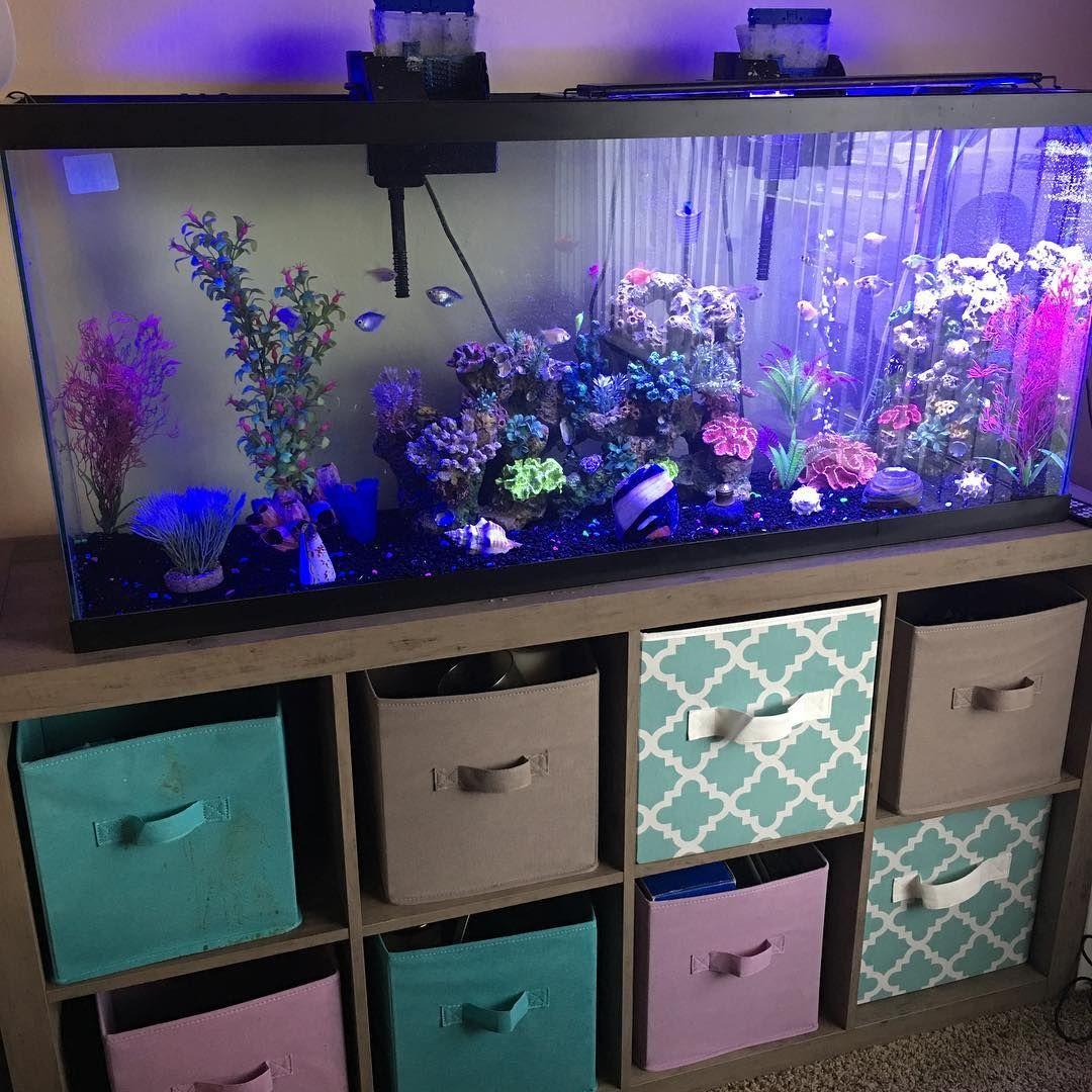 Glofish Aquarium Fish Tank Themes Glow Fish Cool Fish Tanks
