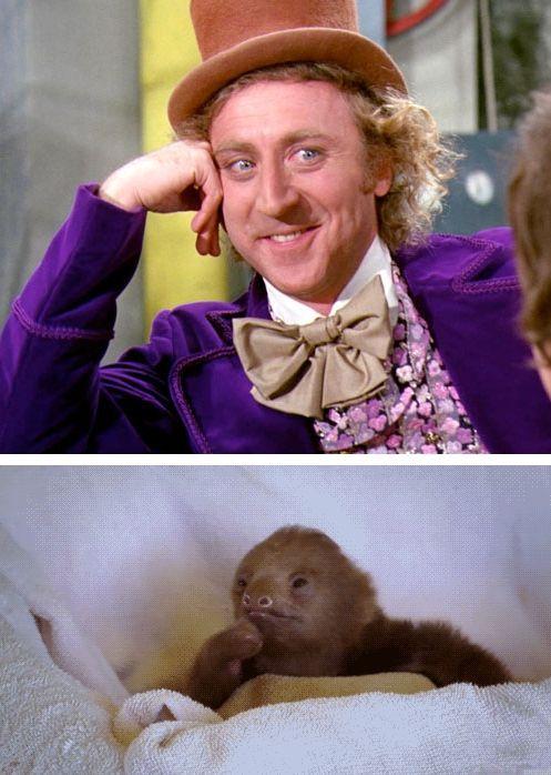 Willy Wonka Animal Edition