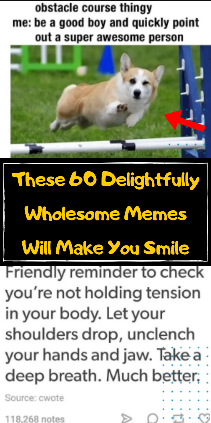 50 Wholesome And Quirky Memes That Will Restore Your Faith In Humanity In 2020 Wholesome Memes Amazing Stories Animals