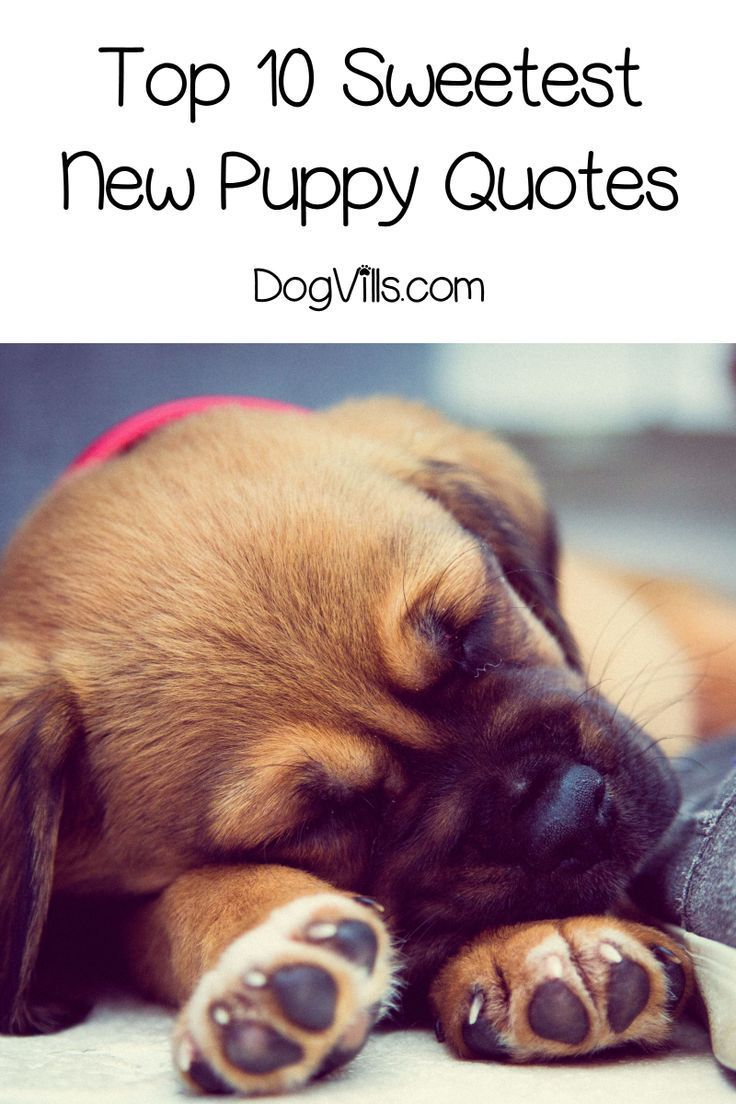 """Top 10 Sweetest New Puppy"""" Quotes New puppy"""