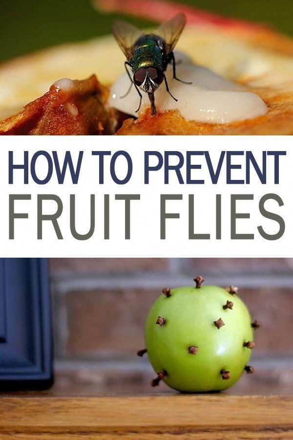 to Prevent Fruit Flies - 101 Days of Organization | Get Rid of Fruit Flies in the House, Pest Removal, Pest Removal Hacks, Pest Control Hacks, Easy Pest Control Hacks