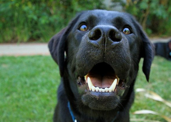 Keep your dog's teeth healthy with these tips! http://www ...