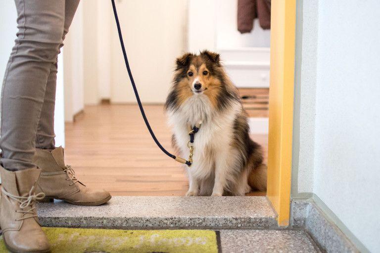Wer Geht Hier Vor Wem Durch Die Tur Hundeerziehung Hunde