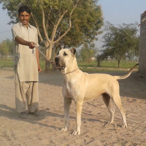 Rare Dog Breeds For Sale In India