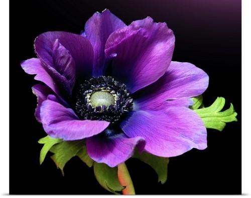 Pin On Purple Garden
