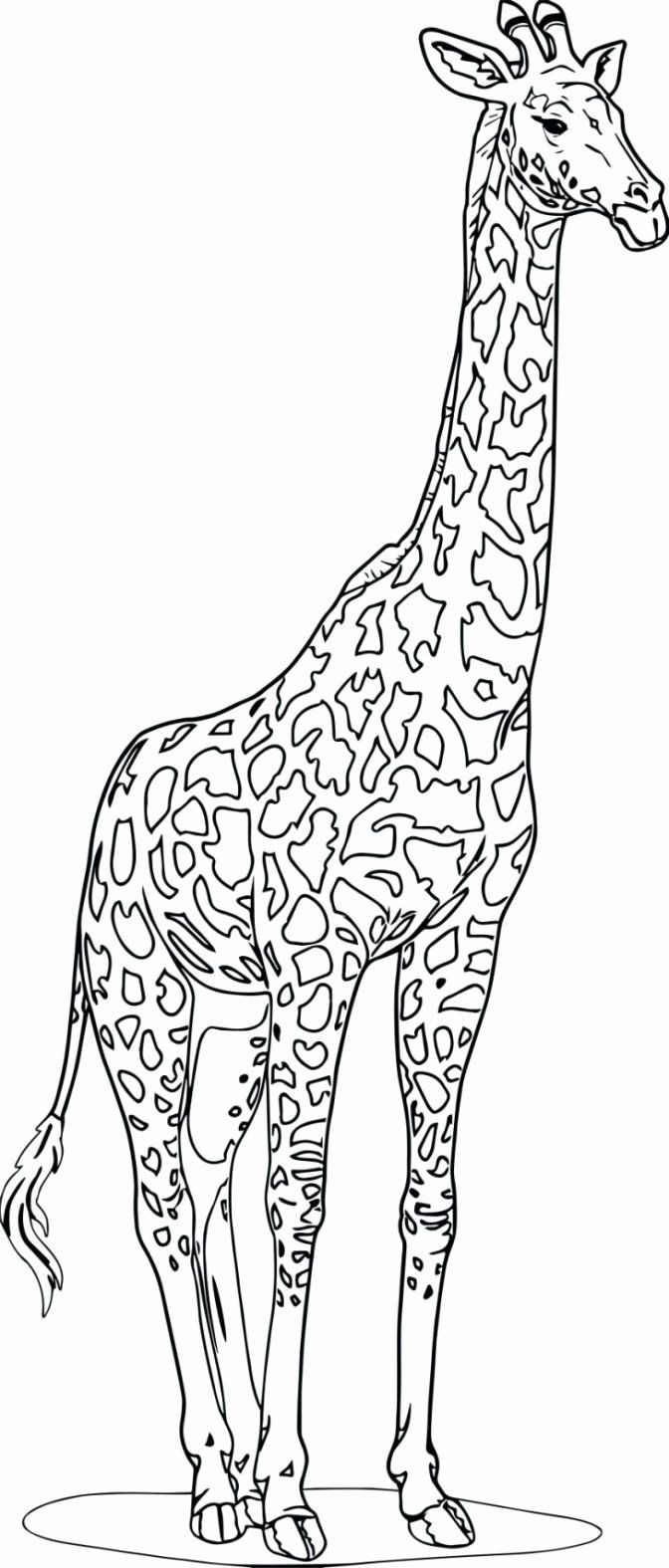 Realistic Animals Coloring Pages Best Of Coloring Printable Animalring Pages Easy Farm R In 2020 Zoo Animal Coloring Pages Giraffe Coloring Pages Animal Coloring Pages