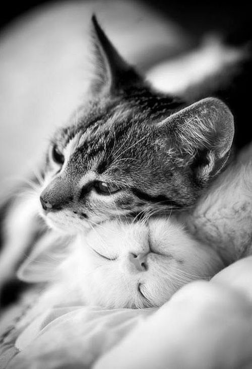Chats Tendresse Animaux Photo Chat Et Chat Mignon