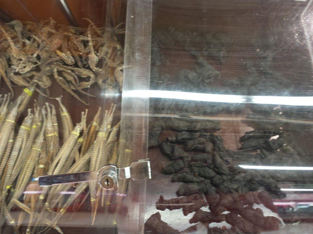 getrocknete Seepferdchen und Seegurken in Xiamen