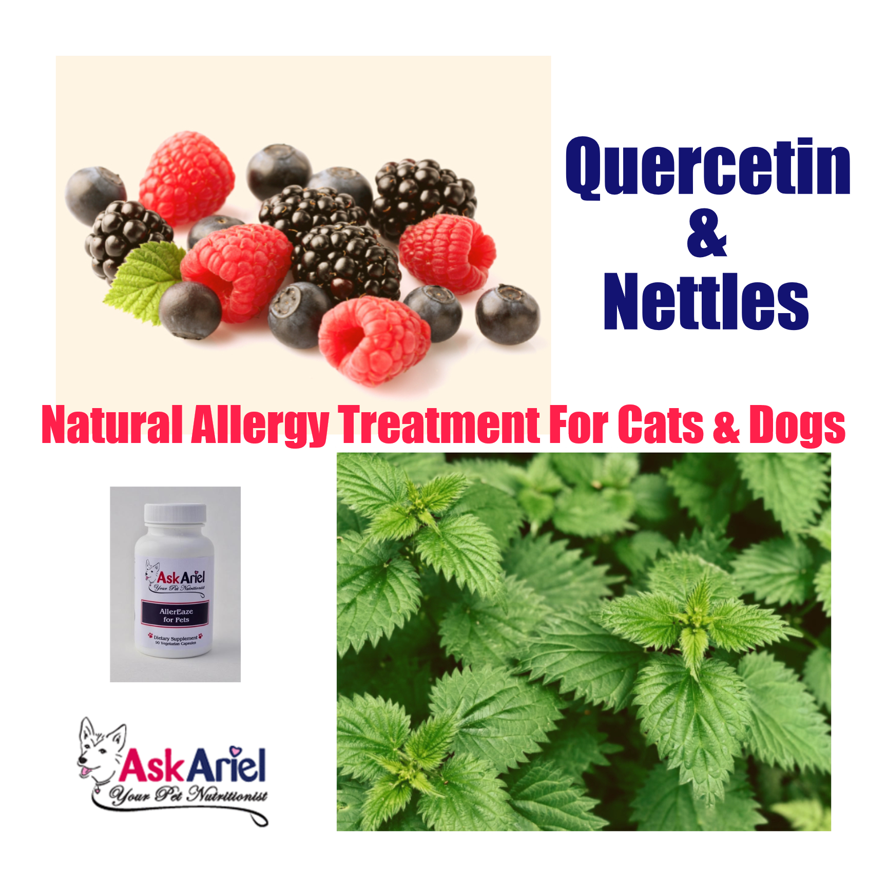 Allereaze By Ask Ariel Natural Remedy For Cat Dog Allergies Dog Allergies Allergy Treatment Natural Allergy