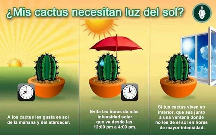 Cactus cuidados