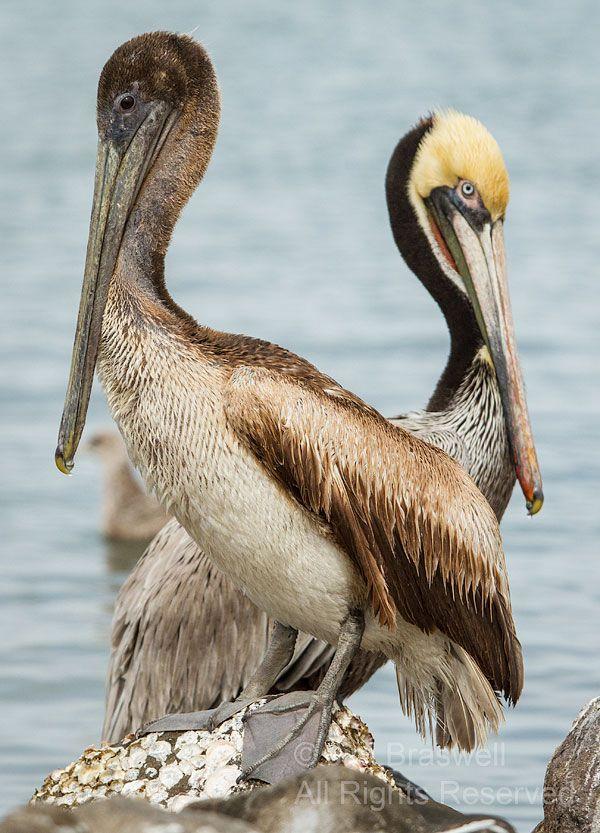 Vis Mig Billeder Af Fugle