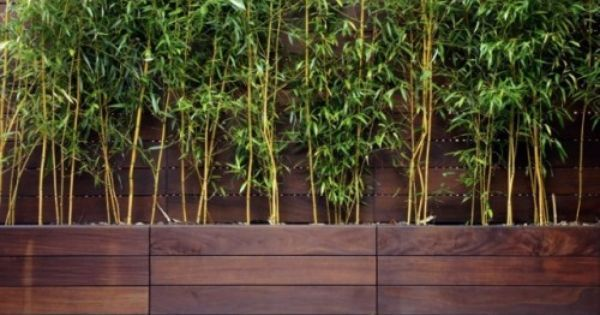 bamboo planter box screen – for along back fence