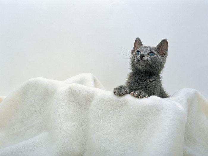 Kitty Kitty - Cute & Charming cat photograph (Vol.2)