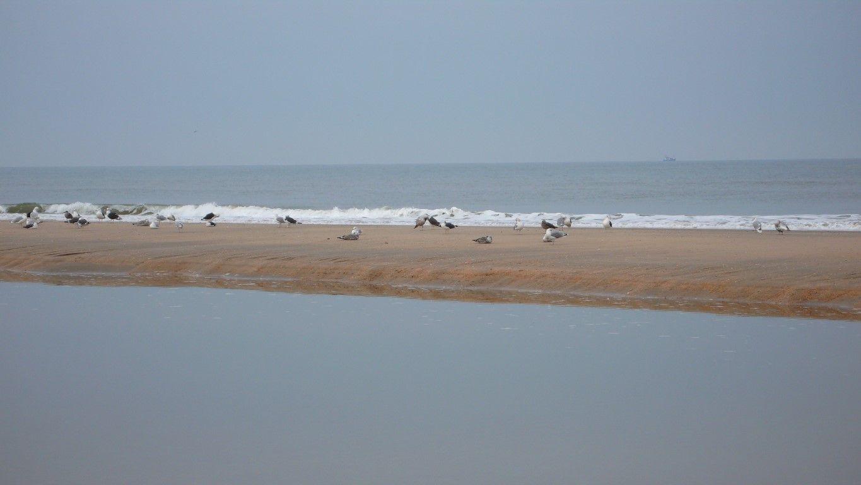 Seagulls on a sandbank