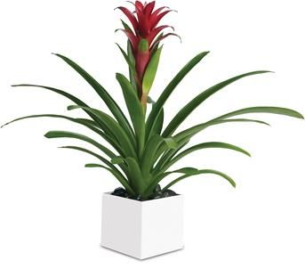 Send An Indoor Flowering Plants As A Gift That Goes On Giving Year After Or Non Make Great Gifts And We Can Deliver Them