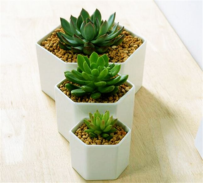 Great Idea For Small Plants!Simple Hexagon Ceramic Flower Pot ...