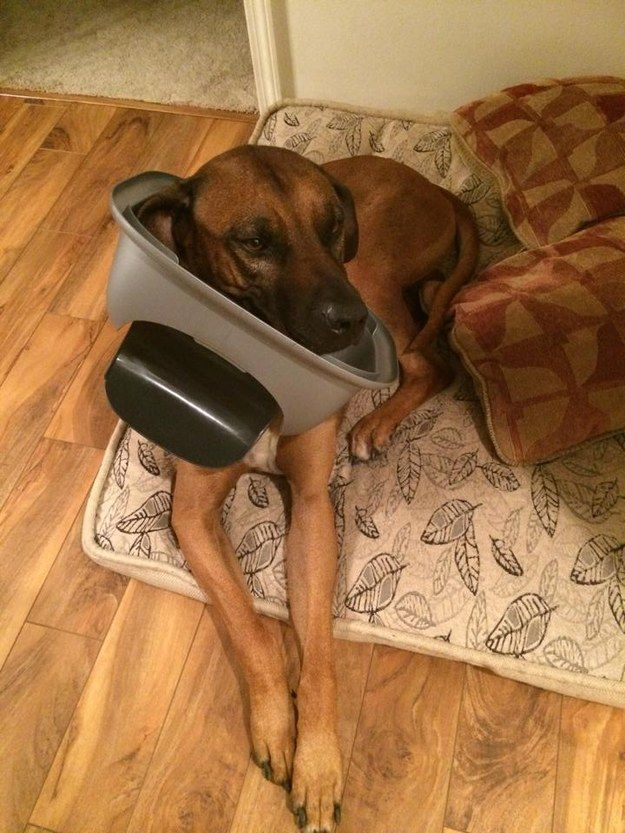 A dog who is just minding his own business and definitely has no idea who got into the trash.