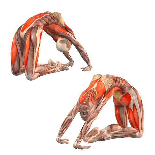 ૐ YOGA ૐVajra Kapotasanaૐ Variación de Postura de postura de ...