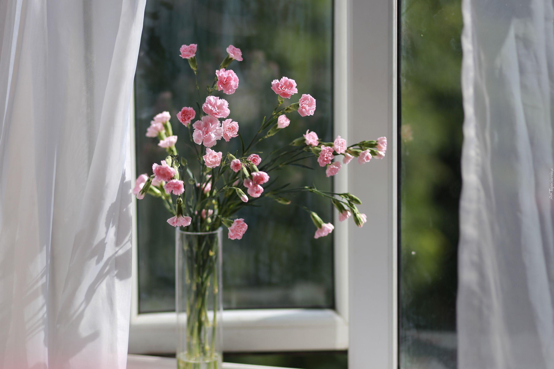 Kwiaty Gozdziki Wazon Okno Vase Glass Vase Wallpaper