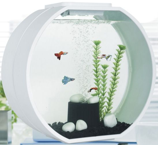 Furniture Accessories:Creative Home Aquarium Design With