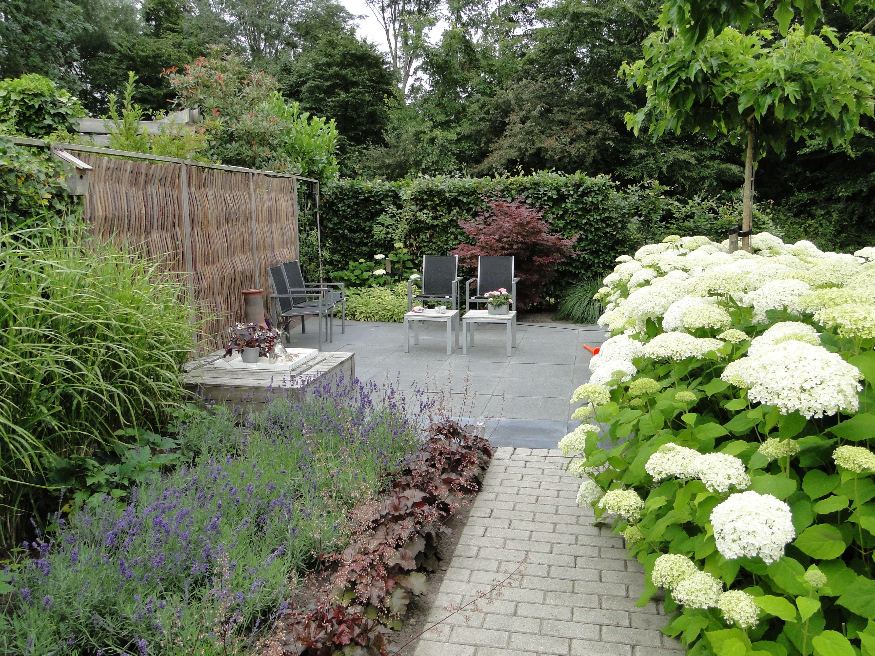Moderne beplanting tuin google zoeken tuin pinterest for Rob eigen huis en tuin