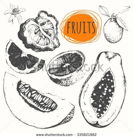 Monash S Portfolio On Shutterstock Fruit Sketch Fruits Drawing Fruit Illustration