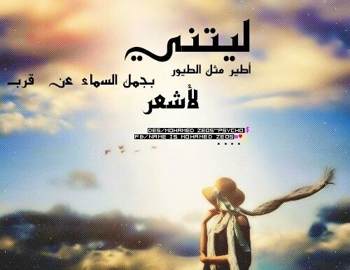 يا ليتني مثل الطيور احلقو بين الاشجار انظرو الى السماء Arabic Poetry Feelings Poetry