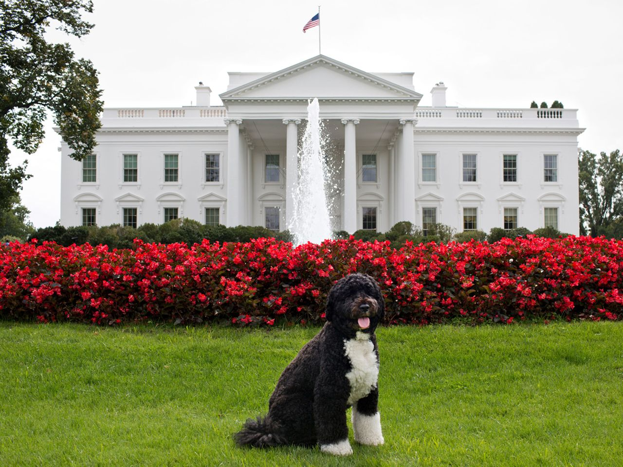 Bo Obama Gets Four More Years In White House Digs Bo Obama