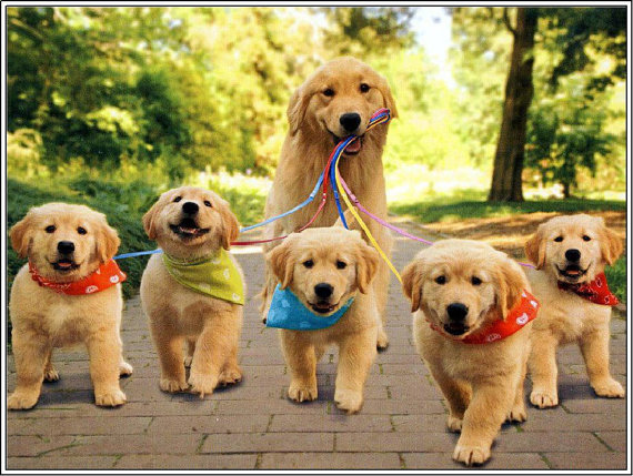 4 Dog Puppy Golden Retriever Dogs Puppies 6 Greeting Notecards
