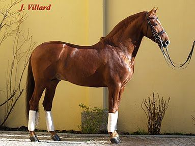 Horsespre