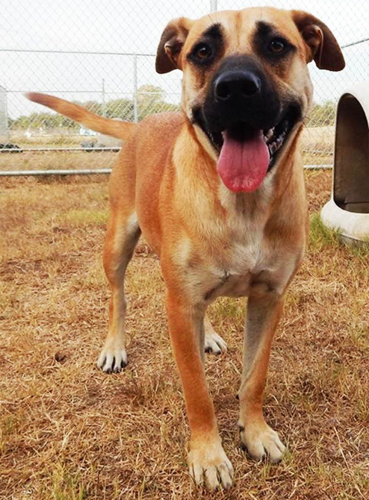 What Happened To The Dog Sam Nia Abandoned At A Kill Shelter