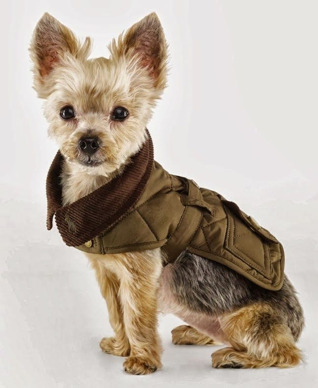 Ralph Lauren The Dog Walk Accessories And Dog Clothing Fall