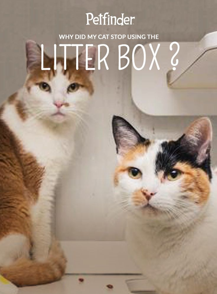 Why Did My Cat Stop Using The Litter Box Cat Training Litter Box Cat Problems Litter Box