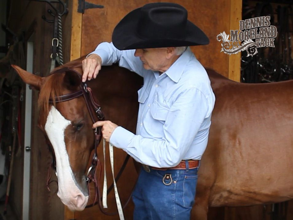 How to measure your horse for a headstall dm tack