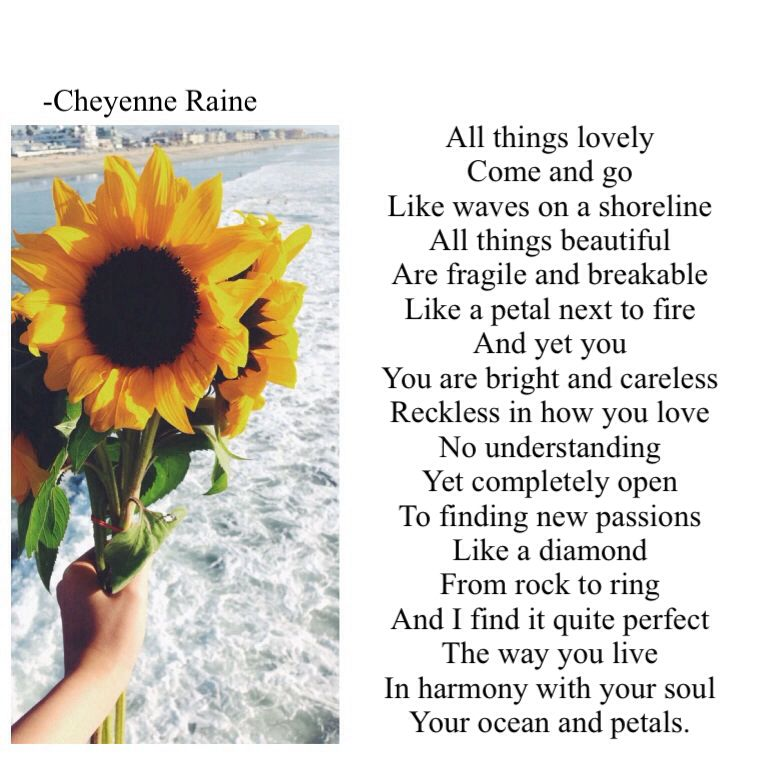 Sunflower Poem Poetry Love Lovely Things Beautiful Ocean