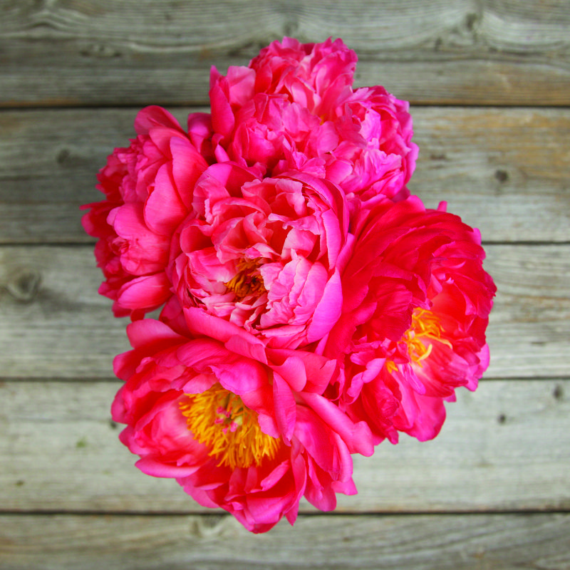 Farm Fresh Flowers Online Flower Delivery The Bouqs Co