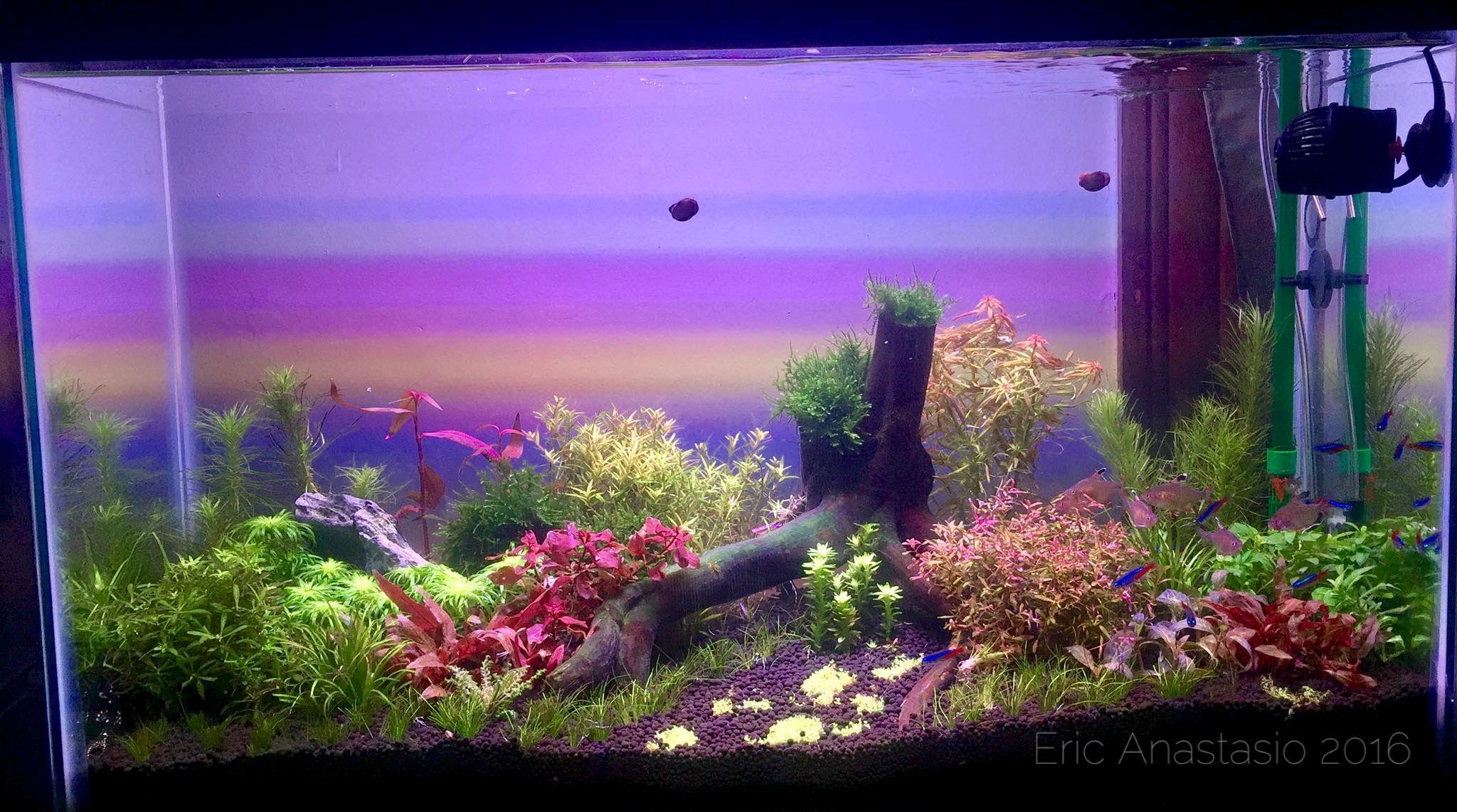 Aquascape Dutch Style